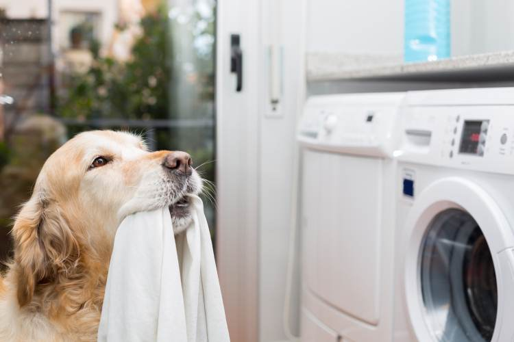 Dog doing the washing in the home